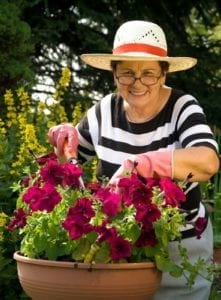 Senior Care Los Angeles CA - National Gardening Exercise Day – Four Gardening Devices Every Aging Adult Needs
